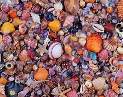 Seashell Pattern / Assortment Jigsaw Puzzle