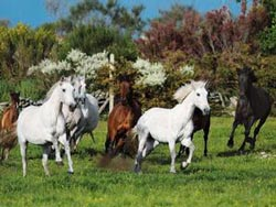 Running Free (Colorluxe) - Scratch and Dent Horses Jigsaw Puzzle