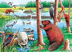 The Beaver Pond Wildlife Tray Puzzle