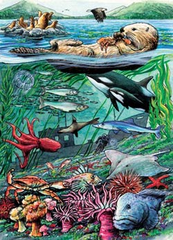 Life on the Pacific Ocean, (tray) Marine Life Children's Puzzles