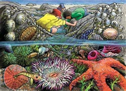 Exploring the Seashore, (tray) Marine Life Children's Puzzles