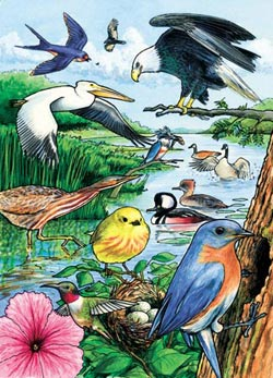 North American Birds Lakes / Rivers / Streams Children's Puzzles