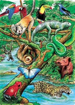 Life in a Tropical Rain Forest Jungle Animals Tray Puzzle
