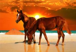 Stallions on the Beach Horses Jigsaw Puzzle