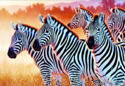 Zebras Zebras Jigsaw Puzzle