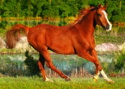 The Beauty Of Gallop Horses Jigsaw Puzzle