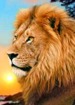 Lion Sunrise / Sunset Jigsaw Puzzle