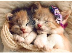 Sleeping Kittens Cats Jigsaw Puzzle
