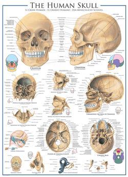 Human Skull Science Jigsaw Puzzle