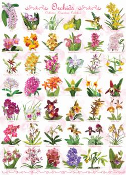 Orchids Pattern / Assortment