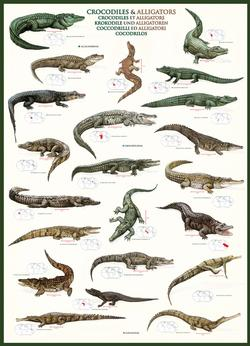 Crocodiles & Alligators Collage Jigsaw Puzzle