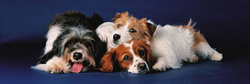 Dogs Dogs Panoramic Puzzle