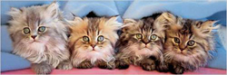 Cats Under Blanket Cats Panoramic Puzzle