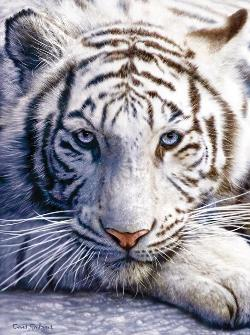 White Tiger Face Wildlife Jigsaw Puzzle