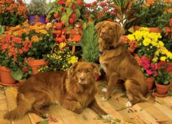 Duck Tollers Flowers Jigsaw Puzzle