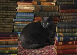 Library Cat Books / Library Jigsaw Puzzle