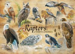 Common Raptors Birds Jigsaw Puzzle