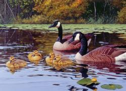 Platts Pond Lakes / Rivers / Streams Jigsaw Puzzle