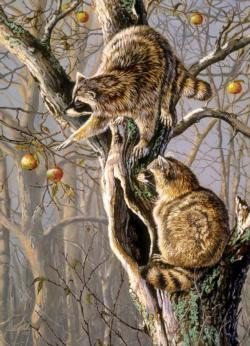 Ringtail Raiders Animals Jigsaw Puzzle