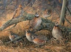 Quail Father's Day Jigsaw Puzzle