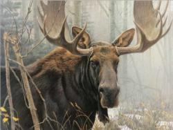 Bull Moose Forest Jigsaw Puzzle