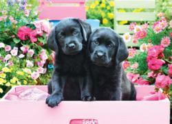 Black Labs in Pink Box Dogs Large Piece