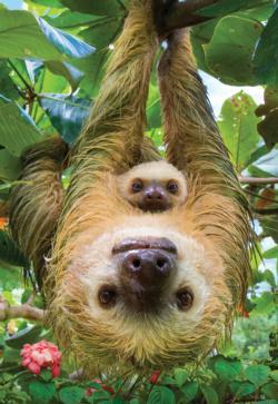 Sloth Animals Children's Puzzles