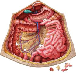 Dr. Livingston's Anatomy Jigsaw Puzzle: The Human Abdomen Science Jigsaw Puzzle