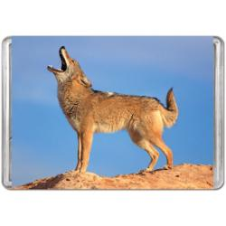 Coyote (Mini) Photography Miniature Puzzle