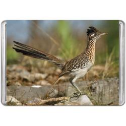 Greater Roadrunner (Mini) Photography Miniature Puzzle