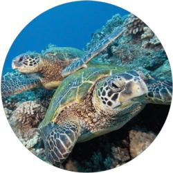 Green Sea Turtle Puzzle A•Round Reptiles / Amphibians Round Jigsaw Puzzle