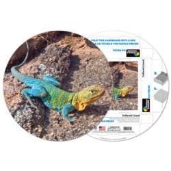 Collared Lizard Reptiles and Amphibians Round Jigsaw Puzzle