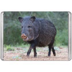 Javelina (Mini) Pig Miniature Puzzle