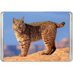 Bobcat (Mini) Photography Miniature Puzzle