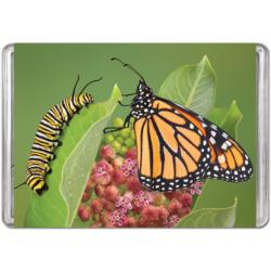 Monarch Butterfly (Mini) Photography Miniature Puzzle