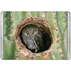 Elf Owl (Mini) Owl Miniature Puzzle
