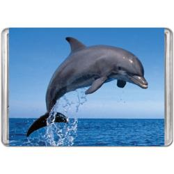 Bottlenose Dolphin (Mini) Dolphins Miniature Puzzle