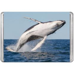 Humpback Whale Fish Jigsaw Puzzle