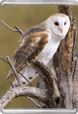 Barn Owl MiniPix® Puzzle Owl Miniature Puzzle