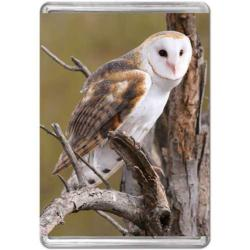 Barn Owl (Mini) Owl Miniature Puzzle