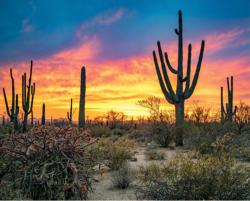 Saguaro Sunset Sunrise / Sunset Jigsaw Puzzle