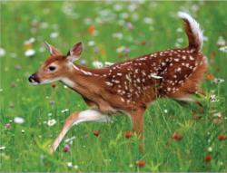 White-tailed Deer MiniPix® Puzzle Wildlife Miniature Puzzle