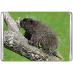 Porcupine (Mini) Animals Miniature Puzzle
