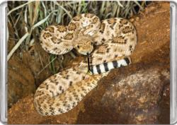 Western Diamondback Rattlesnake MiniPix® Puzzle Snakes Miniature Puzzle