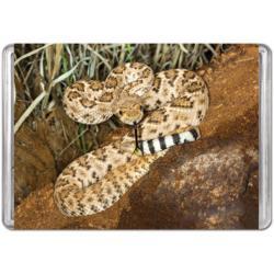 Western Diamondback Rattlesnake (Mini) Snakes Miniature Puzzle