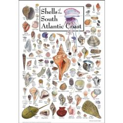 Shells of the South Atlantic Coast Under The Sea Jigsaw Puzzle