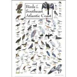 Birds of the South Atlantic Coast Birds Jigsaw Puzzle