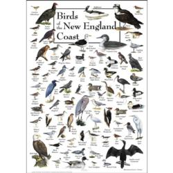 Birds of the New England Coast Birds Jigsaw Puzzle