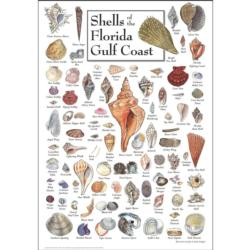 Shells of the Florida Gulf Coast Under The Sea Jigsaw Puzzle