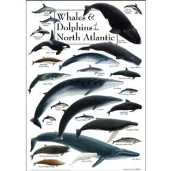 Whales & Dolphins of the North Atlantic Under The Sea Jigsaw Puzzle